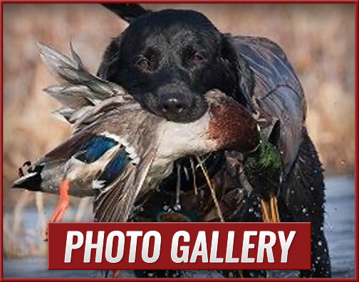 The Goose Guys Waterfowl Hunting LLC Photo Galleries